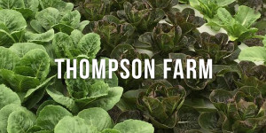 thompson-farm