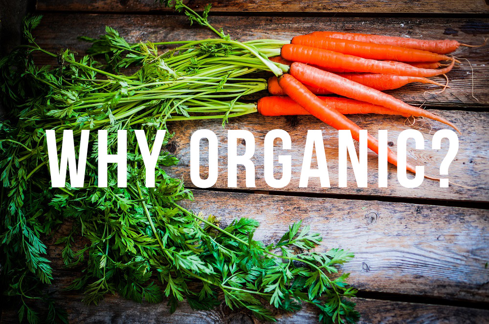 Farm raised organic carrots on wooden background - Why We Are Organic | Local Urban Kitchen